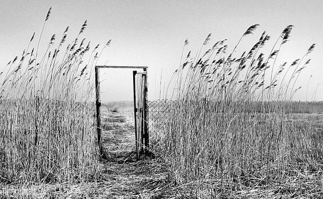 во степи во поле